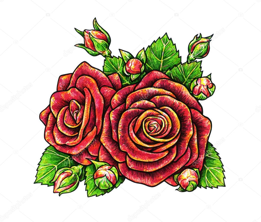 Dibujos Rosas Rojas Para Dibujar Flores De Rosas Rojas Es Aislado