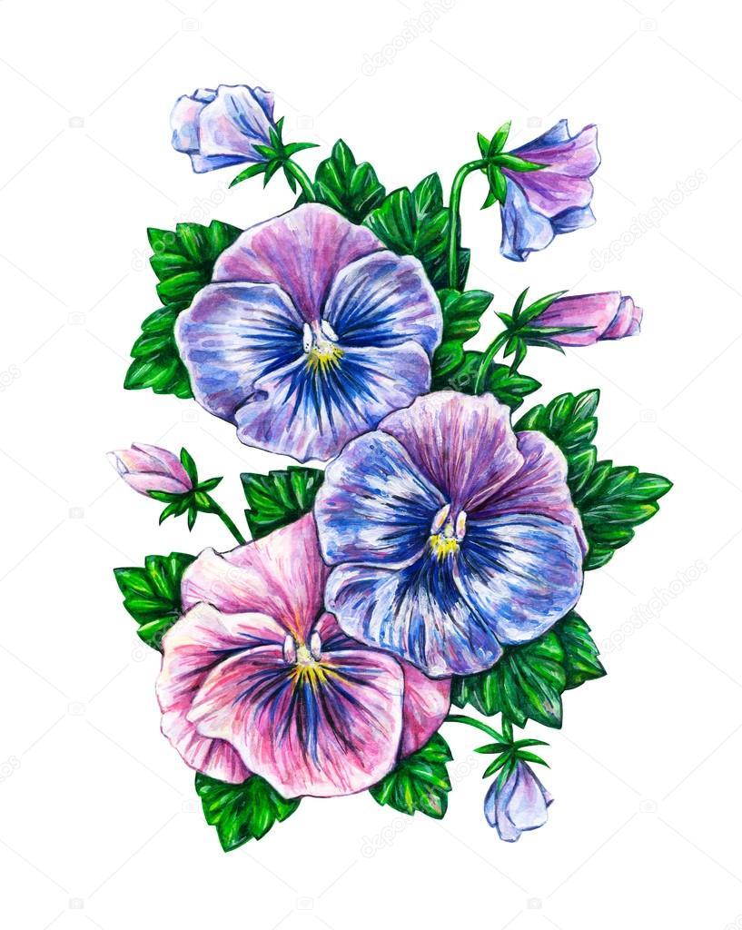 Viola tricolor.