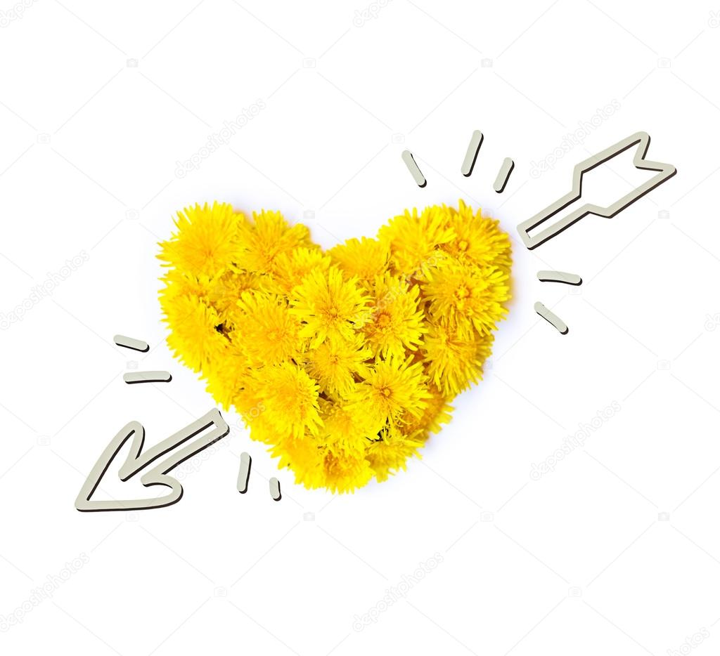 Dandelion flowers in the form of heart are isolated on a white background with an arrow. art photo