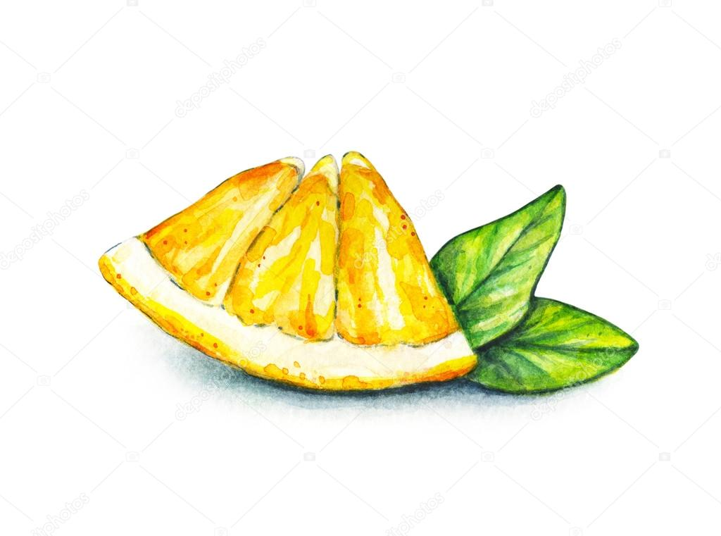 tranche de fruit orange avec des feuilles vertes travail manuel fruits tropicaux alimentation. Black Bedroom Furniture Sets. Home Design Ideas