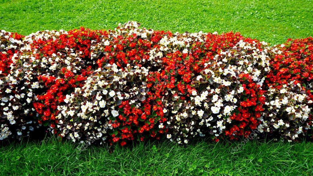 Flores Rojas Y Blancas En El Jardin Mirabell Foto De Stock