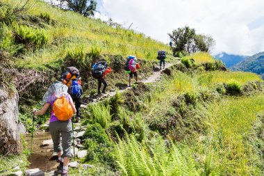 A group of people hiking through a scenic terrace plantation in Nepal