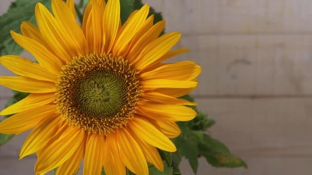 žlutá slunečnice na dřevěném pozadí