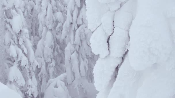 Téli táj hó fenyő erdő