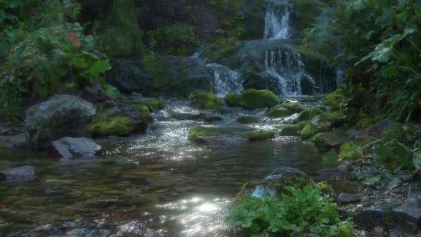 Vodopád v deštném pralese. Potok teče mechem porostlými útesy do malého rybníčku