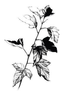 Flower Nifty gentle hand drawn botanical stalk. Vintage nature element for visit card or wedding invitation. Stylish flower, fancy blossom. Black line botanical motiv. Herbal culm. icon