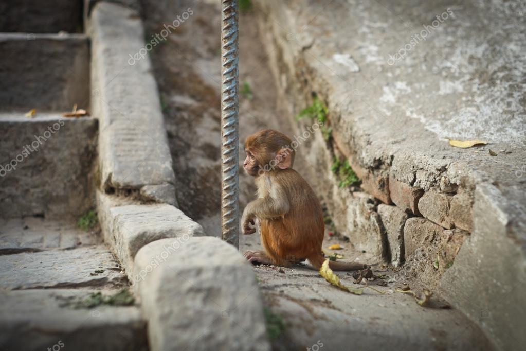 Small Monkey sitting