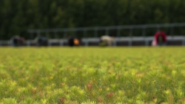 Farm a munkavállalók az ültetvény óvoda