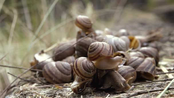 Many snails close up