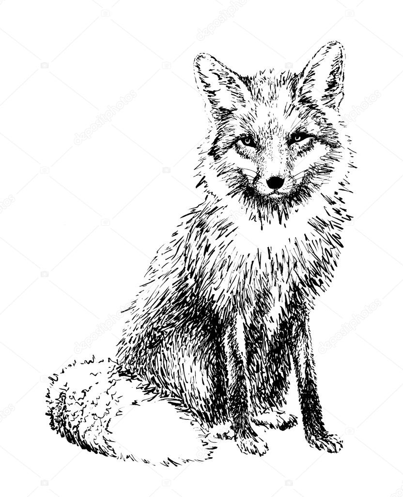 Fox graphics drawn in black ink. Illustration