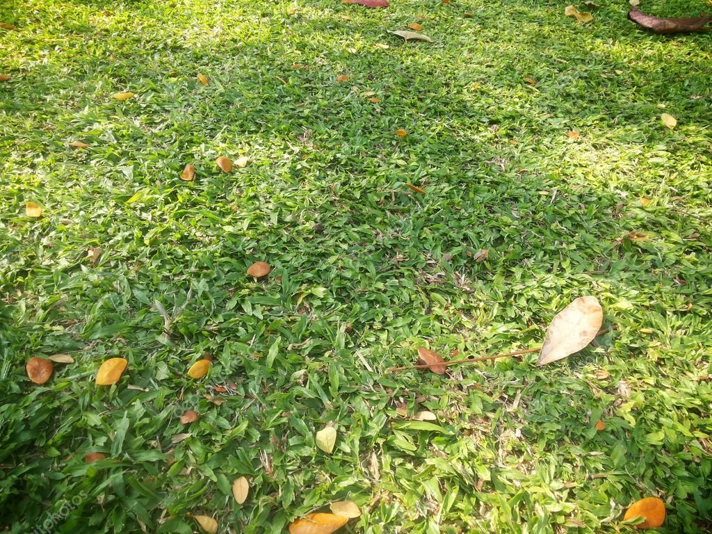 Green grass texture background and dry leaves wallpaper