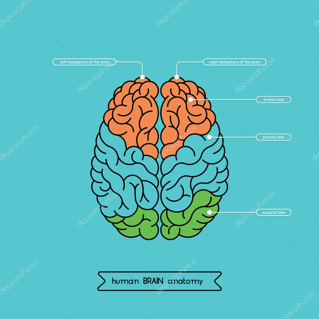 Brain top 1 stock vector shopplaywood 91030468 brain top 1 stock vector ccuart Choice Image