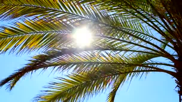 Sun shimmers through palm tree leaves on a clear summer day