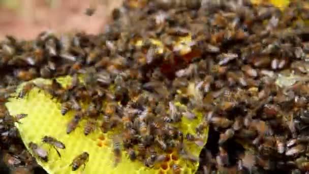 Blízký záběr včely na med
