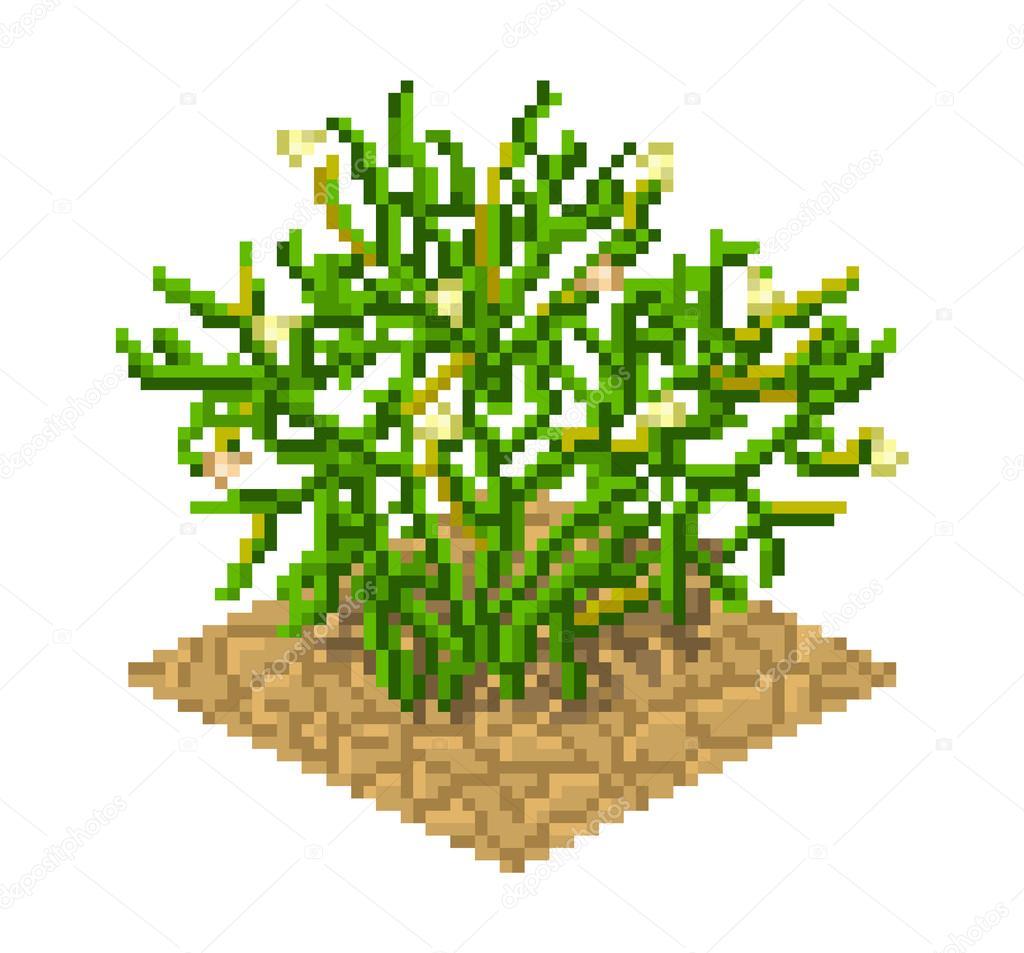 Peganum harmala plant in pixel art style