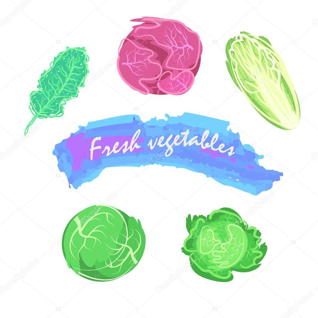 Set of isolated eco cabbage on white.