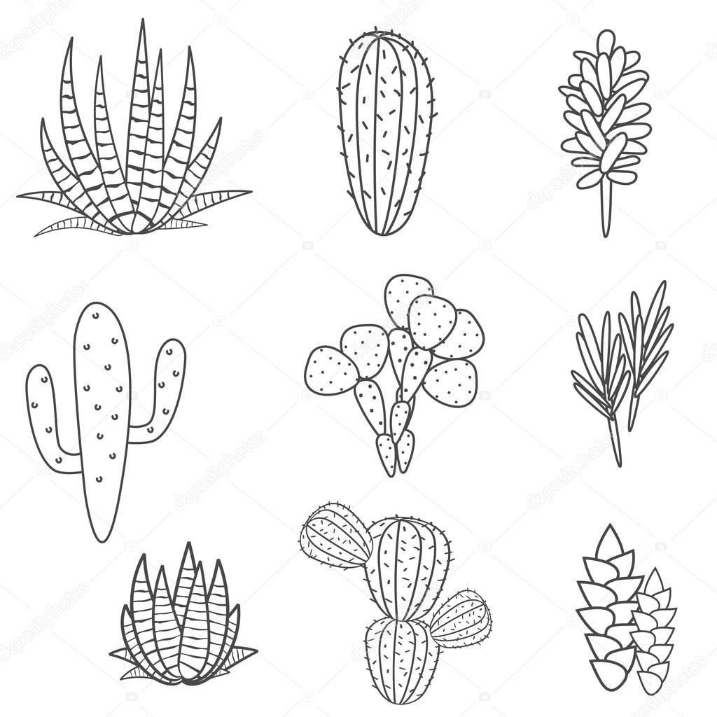 Succulents plant vector set. Botanical black and white cactus flora collection.