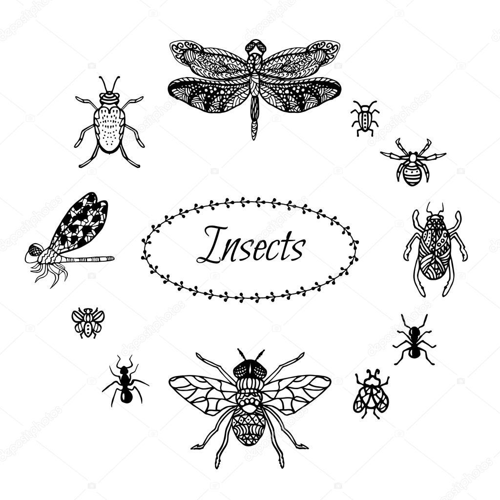 Mano dibujada en estilo zentangle insectos. Libélula de tinta negra ...