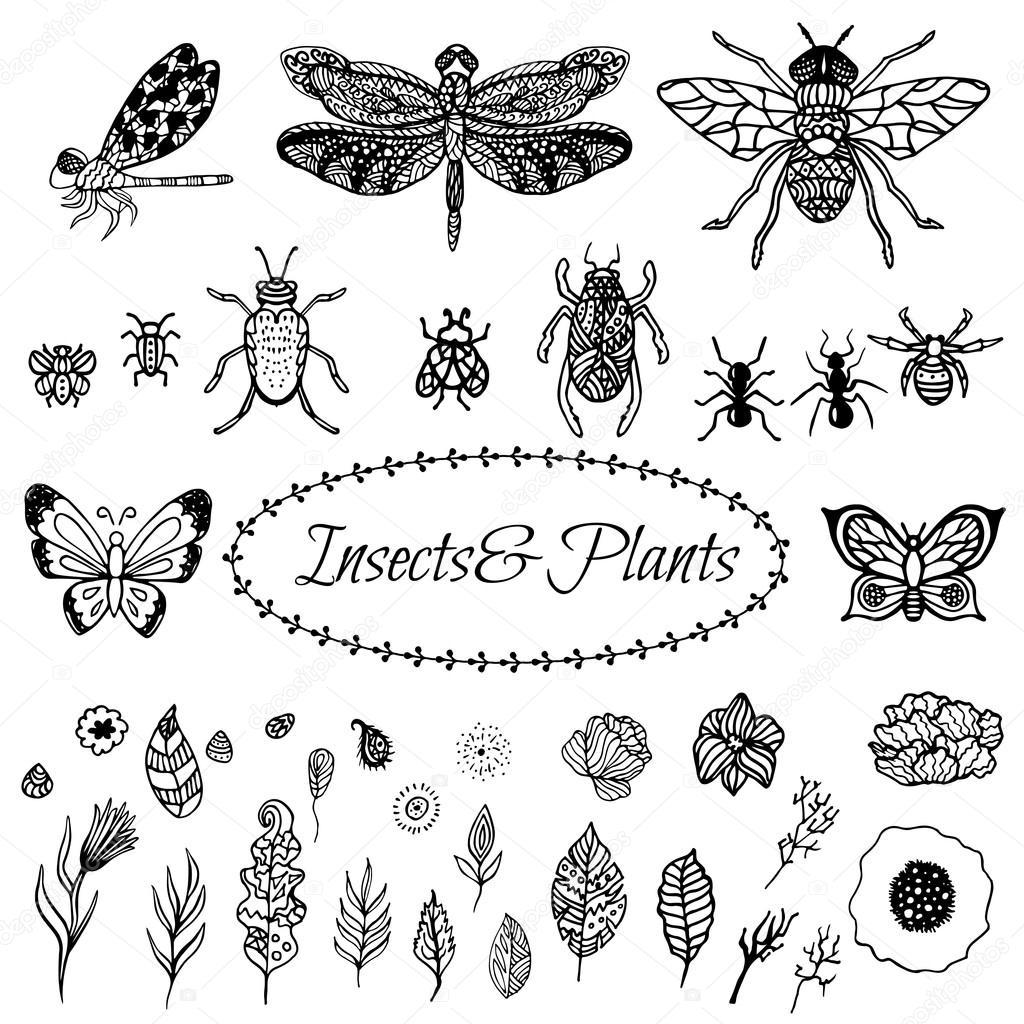Mano dibujado vector zentangle negro planta hojas, flores e insectos ...
