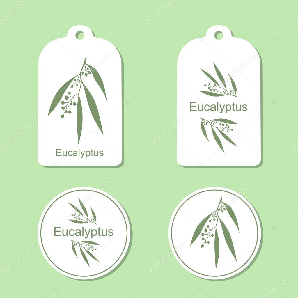 Silhouette of Eucalyptus with leaves.  Medicinal plant. Healthy lifestyle. Vector  Illustration. Health and Nature Set of Tags and Labels