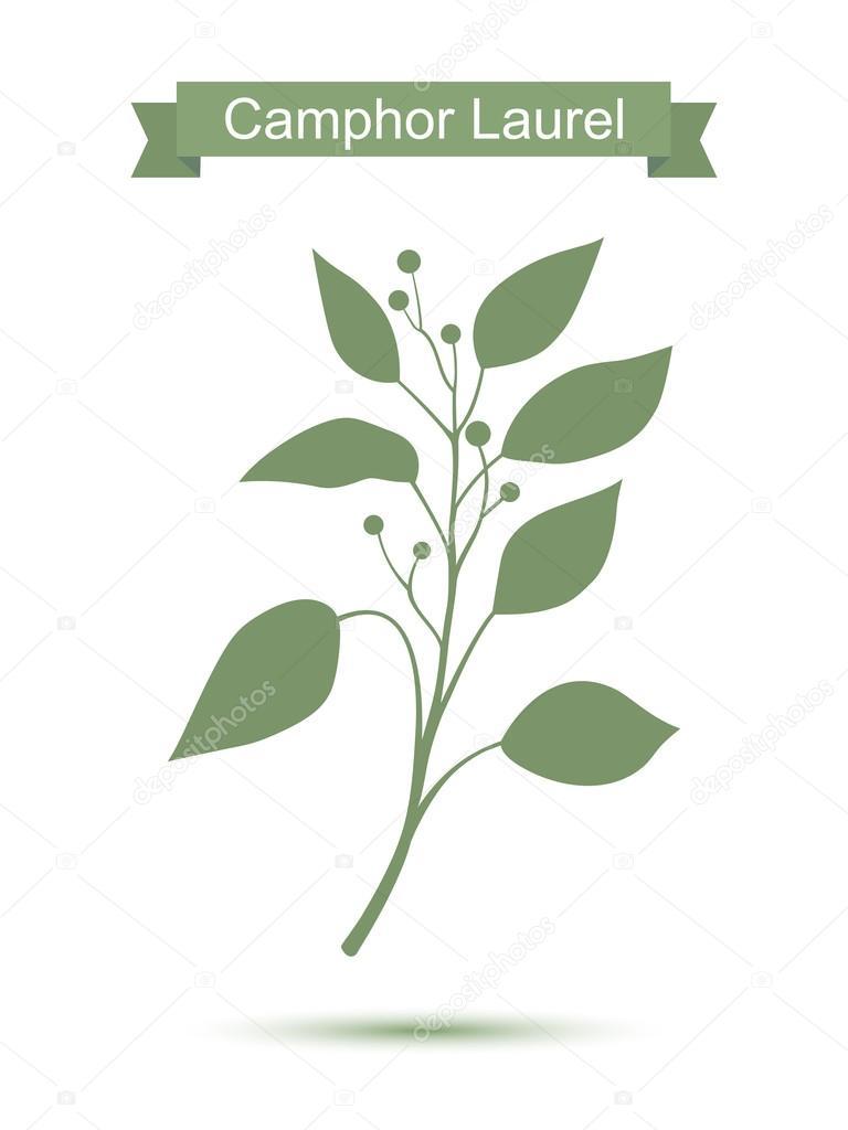 Camphor laurel branch. Green silhouette