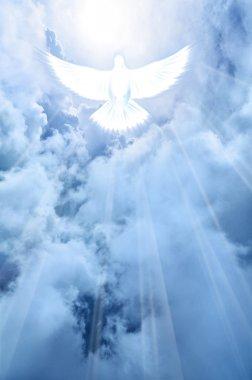 White dove descending from the sky