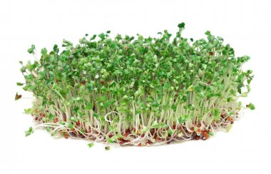 Young broccoli sprouts, a phytochemical-rich cancer-fighting food