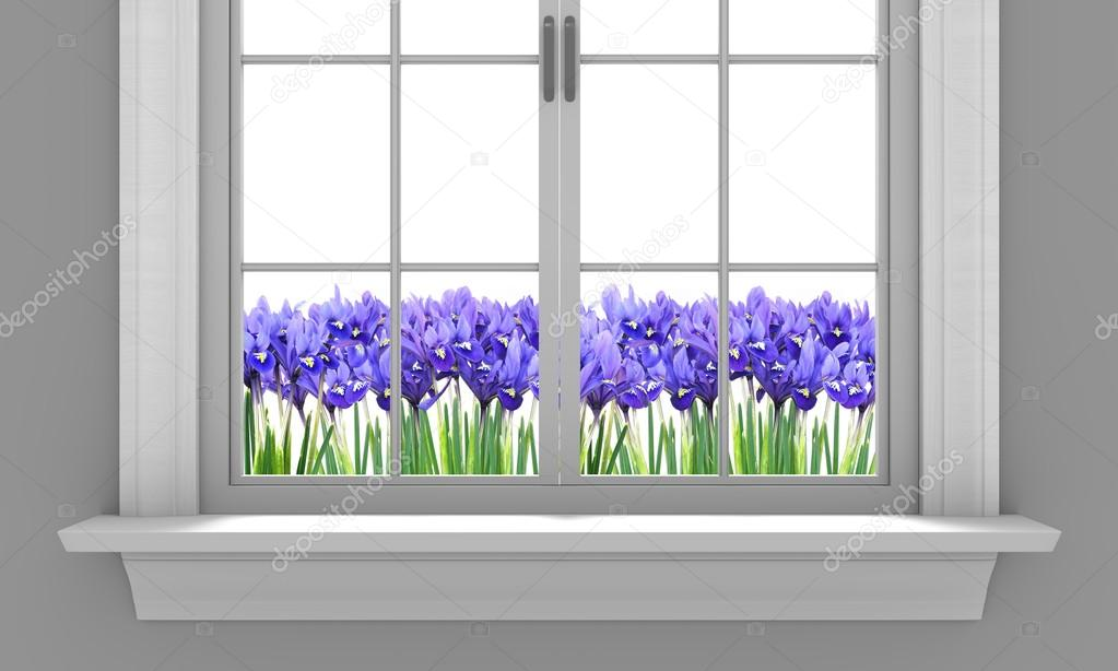 Beautiful spring irises flowering outside a house window