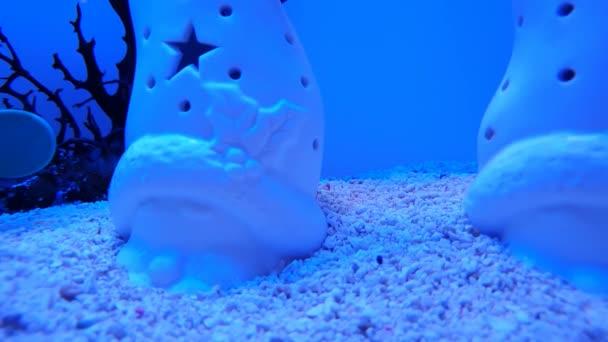 Blau ziemlich Unterwasser friedliche Atmosphäre Hintergrund