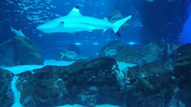 Aquariums Pacific Hall Various sharks and fish