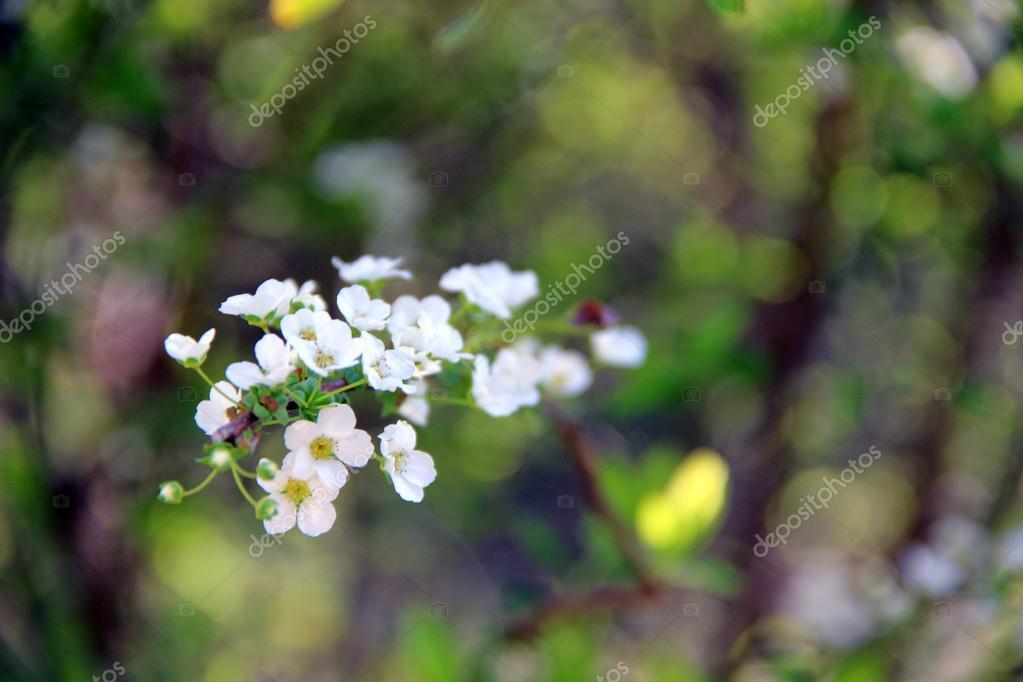 Spring flowers stock photo koshe4ka87list 67852847 spring nature blossom beautiful flowers photo by koshe4ka87list mightylinksfo