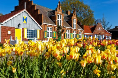 Tulips and Springtime in Holland Michigan