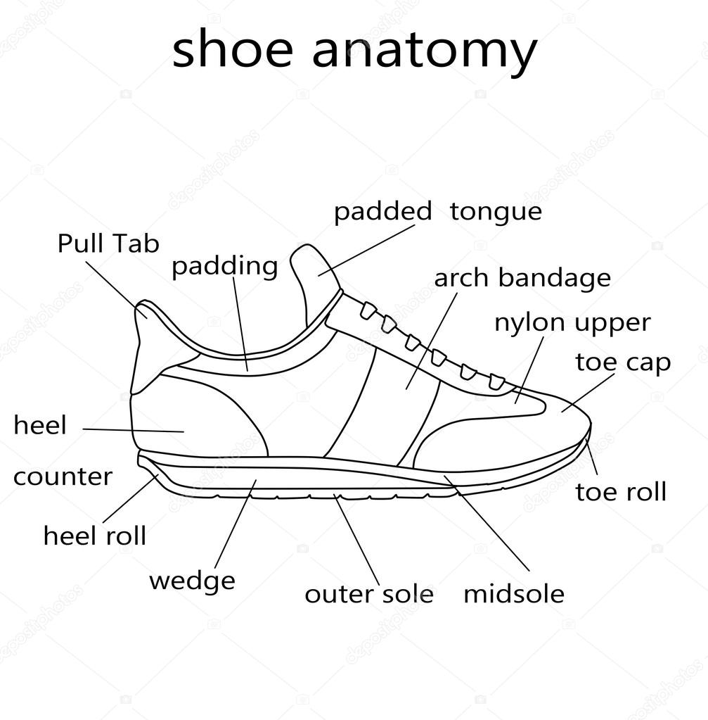 Fashion Illustration Raster Illustration Of The Anatomy Of A Shoe