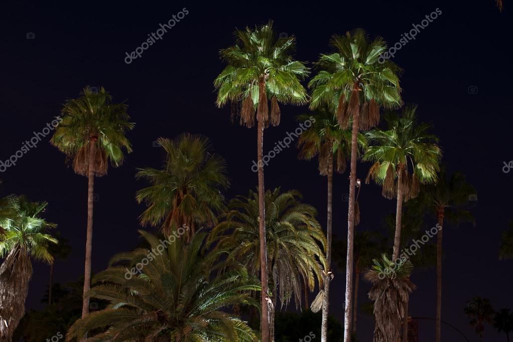 Palmbomen die worden verlicht met verlichting — Stockfoto ...