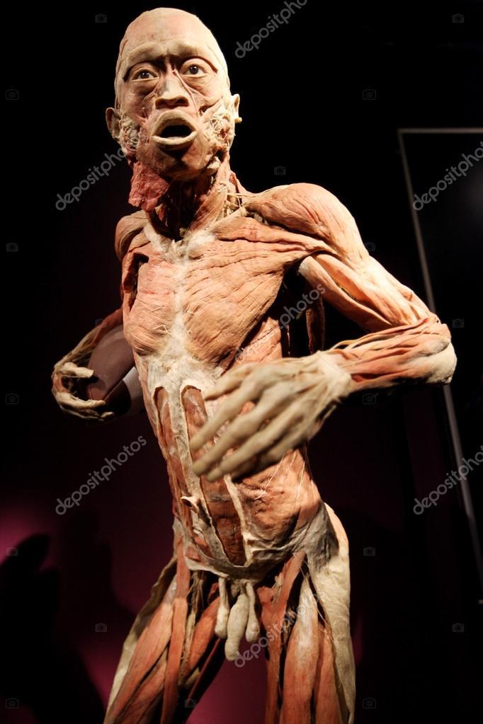 der menschliche Körper-Ausstellung — Redaktionelles Stockfoto ...