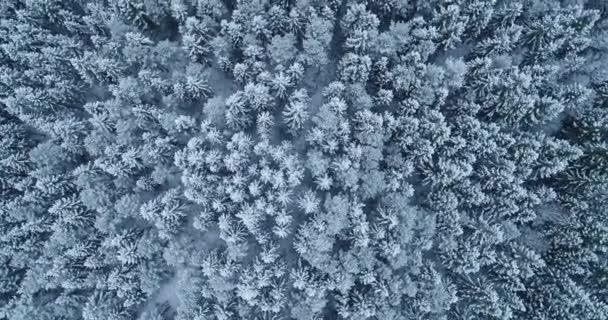 Flug über atemberaubende winterliche boreale Wälder, die mit Schnee und Frostdecke bedeckt sind. Schüsse in Estland, Nordeuropa.