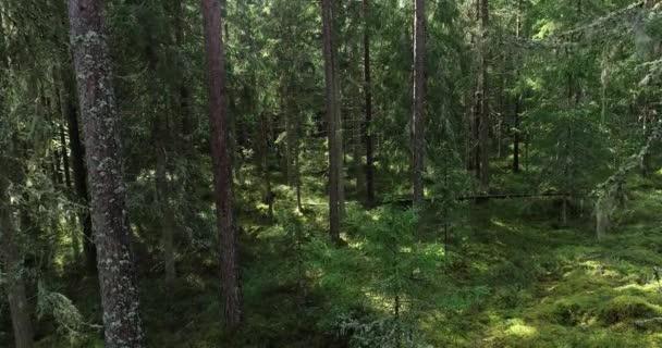Ein Drohnenflug durch den magischen estnischen Borealwald in Nordeuropa im Sommer.