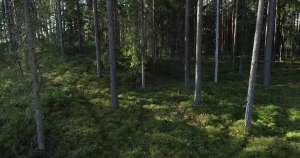 Langsamer Flug durch schönen und sonnigen Borealwald mit hohen Kiefern und Fichten im Spätherbst, gedreht in Estland, Nordeuropa.