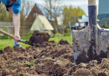 Cultivation of the garden beds
