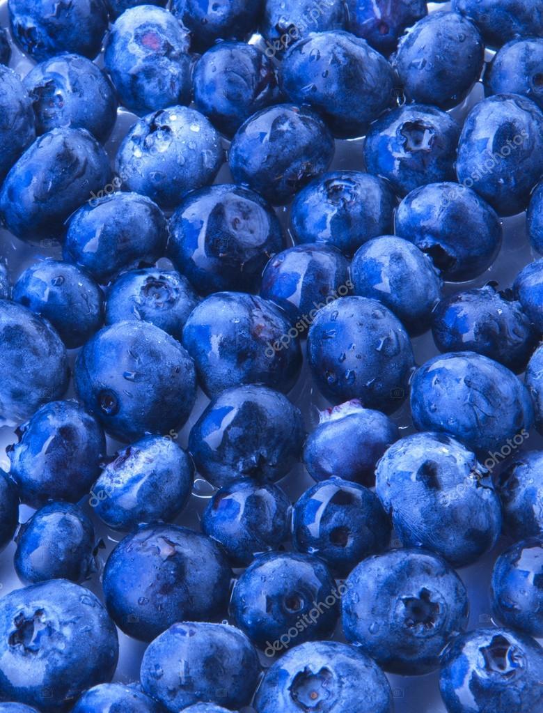 que son los arandanos azules