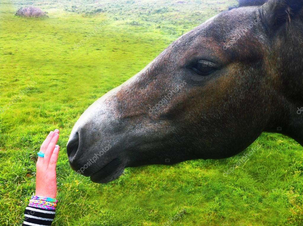 Kid caressing a horse