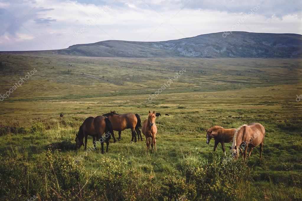 small herd of horses in valley