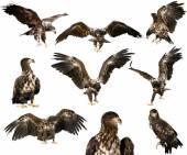 Photo hawk isolated on  background