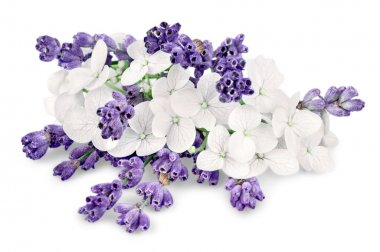 bunch of lavender on white