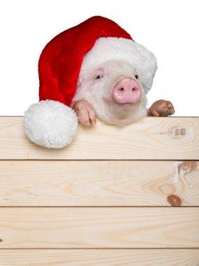 cute piglet in santa hat
