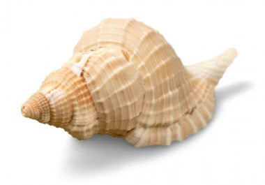 Sea shell on background
