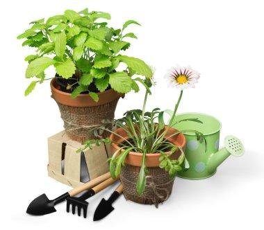 Gardening Equipment and plants