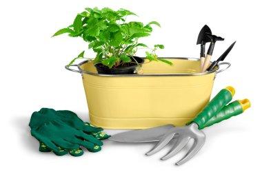Gardening Equipment and plant