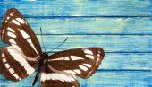 Fotografie barevný motýl izolované