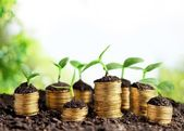 Mince v půdě s mladými rostlinami